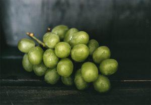 vinifika-achtergrond-tros-druiven-wit-websafe